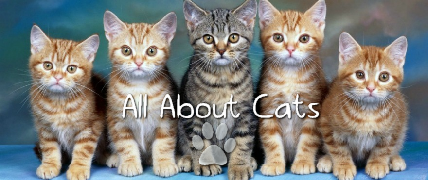 All about cute little cats!
