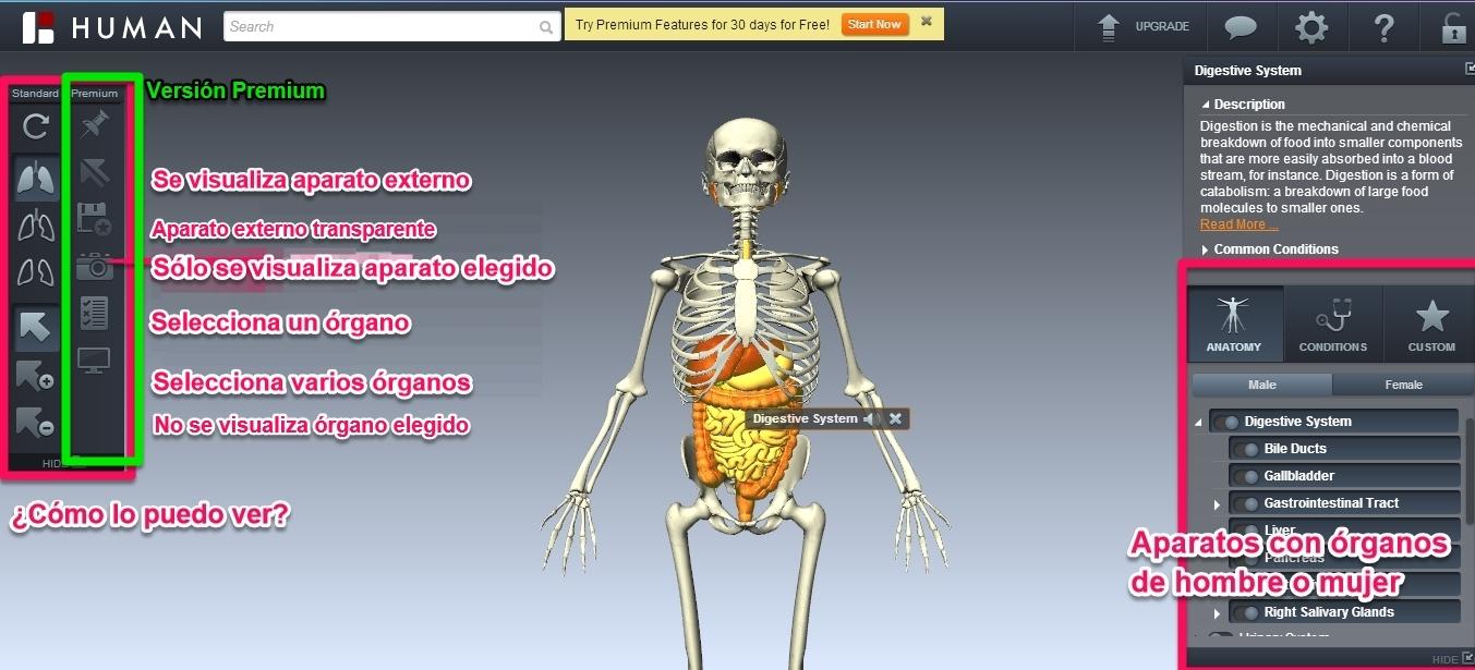 Visualiza el cuerpo humano en 3D