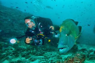 napoleon fish 4