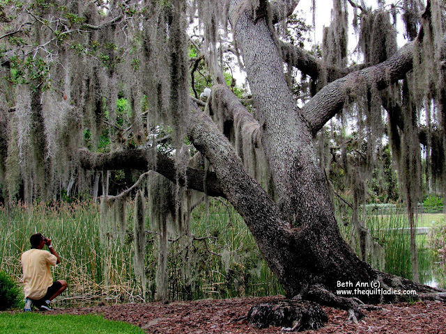 Single Tree in Florida photo by Beth Ann Strub