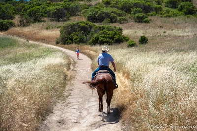 Dog Hiking Review of WINDY HILL OPEN PRESERVE - a man on horseback