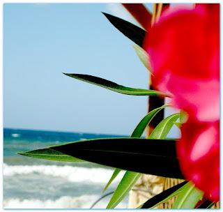 Krit je naveće grčko ostrvo, a peto po veličini u Sredozemnom moru.