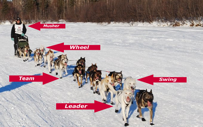 Sled Dogs 101!