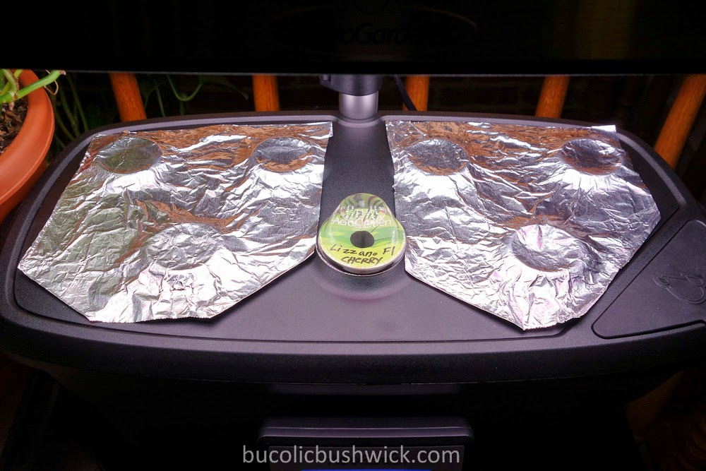 Bucolic Bushwick Using The Aerogarden Ultra Led For The