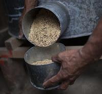 Alberto Da Costa shows part of his rice harvest