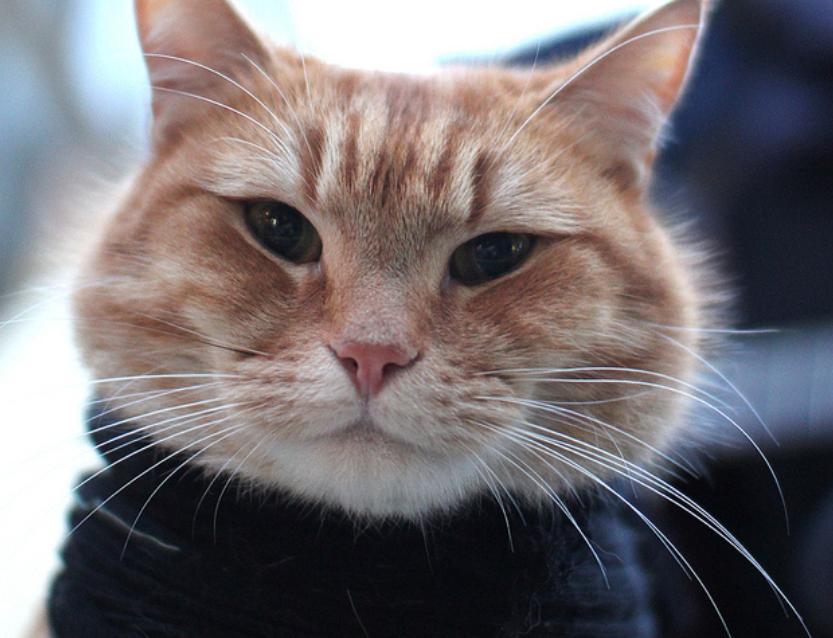 How Long Is A Street Cat Named Bob
