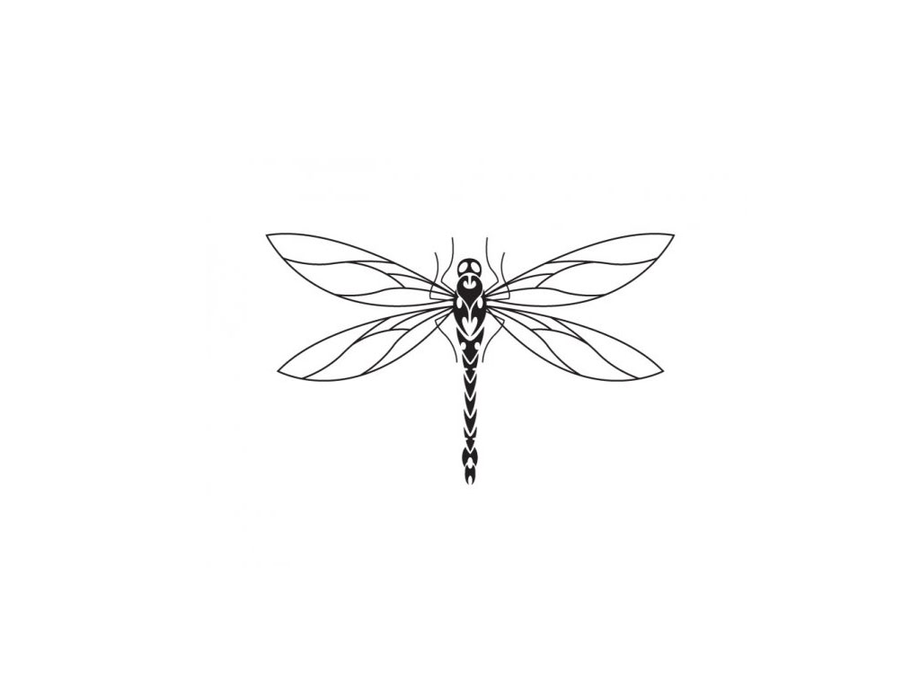 Dragonfly Tattoo Line Drawing : Thin body and long wings of dragonfly tattoo