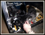 10/02/11 These Kitties Are As Good As Dead If You Don&#39;t Rescue Adopt, Donate,Foster