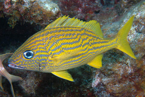 Surfwriter girls u s and cuba ocean alliance for Caribbean reef fish