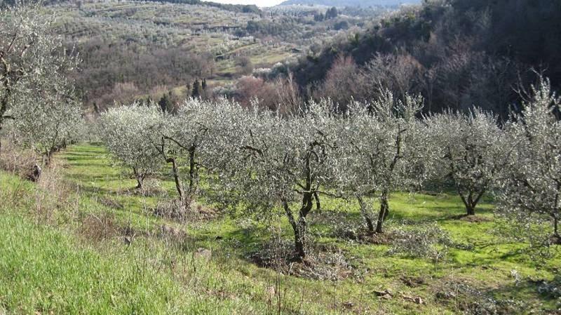 Esenzione IMU su terreni: abolita in 2.000 Comuni italiani
