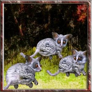 http://1.bp.blogspot.com/-EXPxAwvuCOQ/VUwsF2nJqPI/AAAAAAAADLQ/tSJ-_WOnsFM/s1600/Mgtcs__BushBabies.jpg