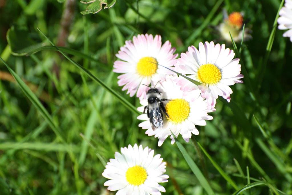 Insekt an Blume