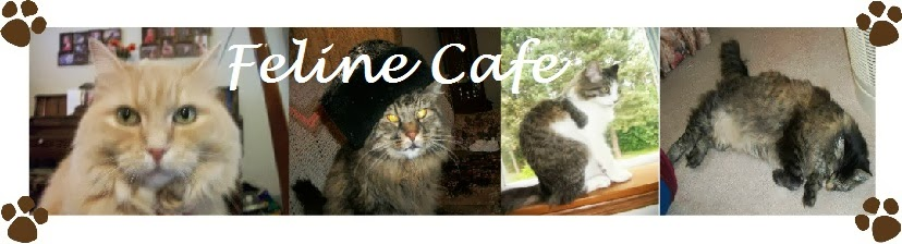Feline Cafe