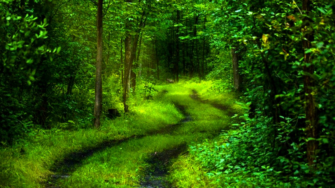 Path of nature wallpaper