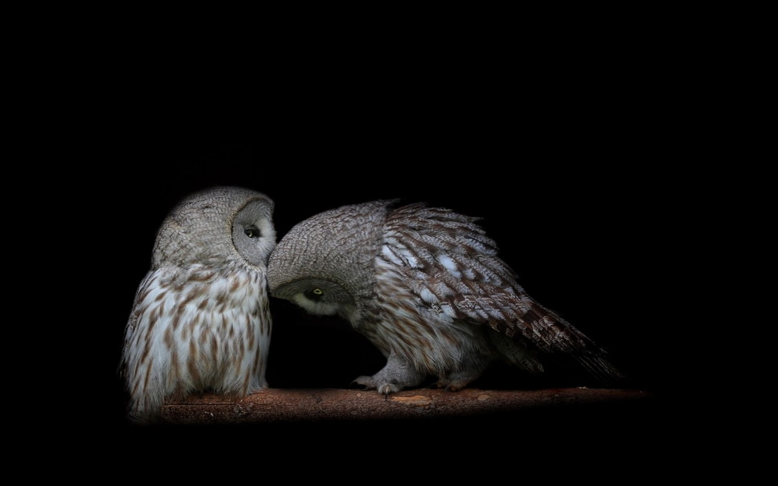 hd owl wallpapers owl pictures hd animal wallpapers