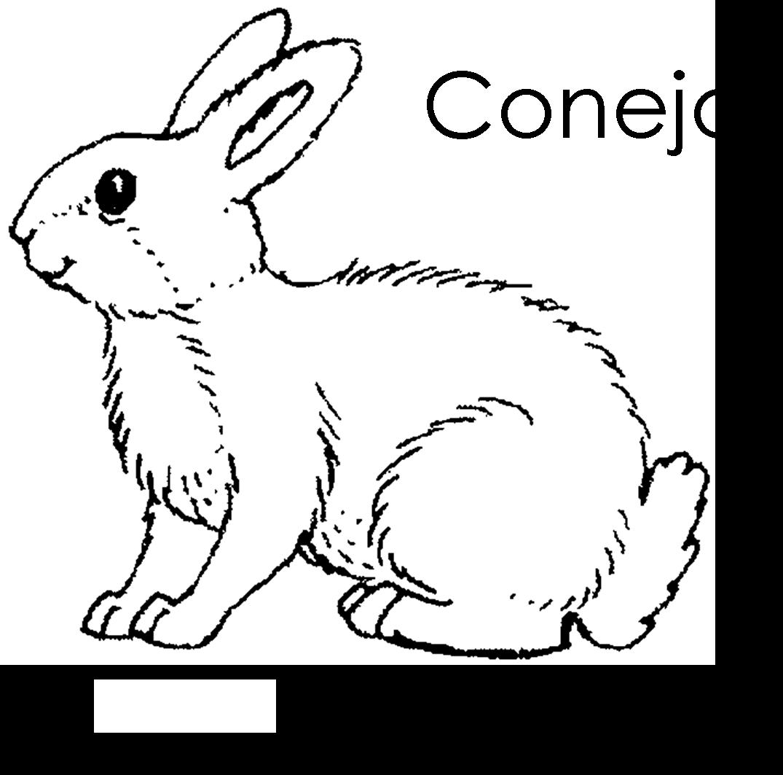Imagenes para dibujar en Ingles y español: Animales del ...