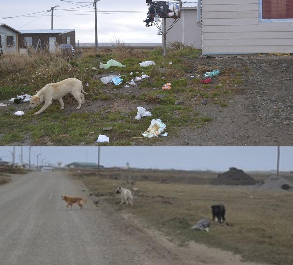 Vecinos amenazan con envenenar perros sueltos