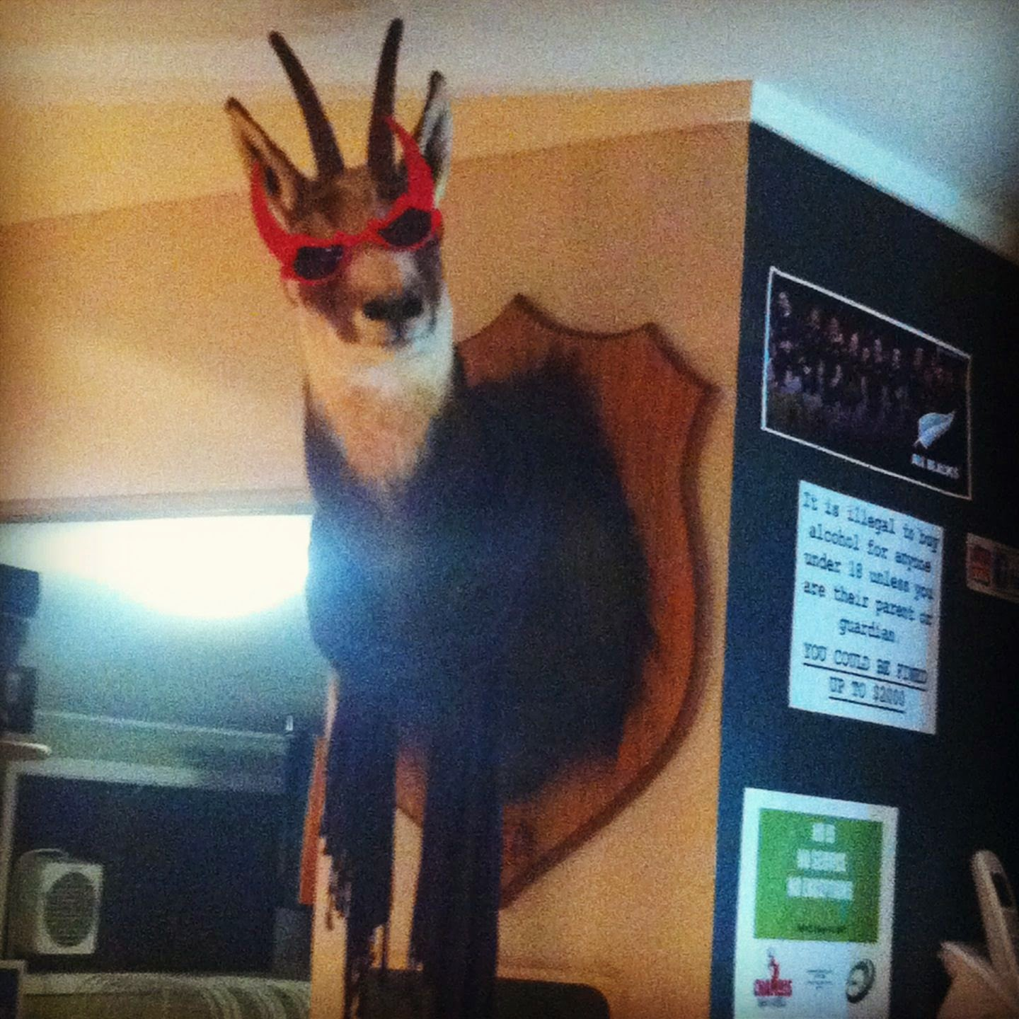 Stuffed deer head wearing sunglasses and a scarf.