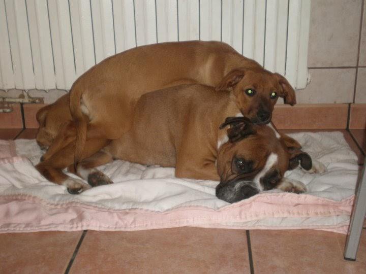 Animales dom sticos beneficios de tener mascota en casa - Mascotas originales para tener en casa ...