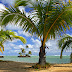 Coconut Tree on the Beach Nature HD Wallpaper