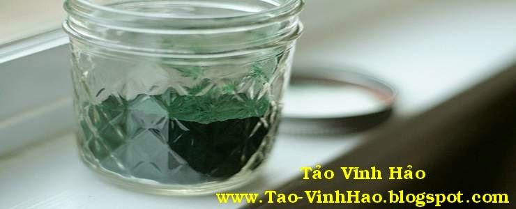 tảo bột nguyen chất