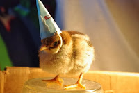 Baby chick with tiny birthday hat