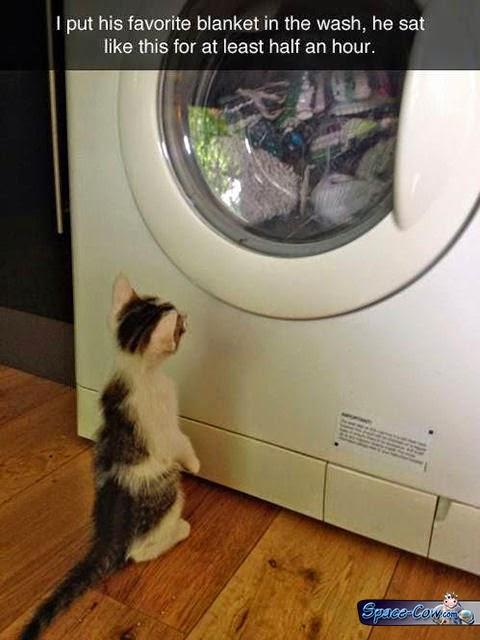funny cute cat picture
