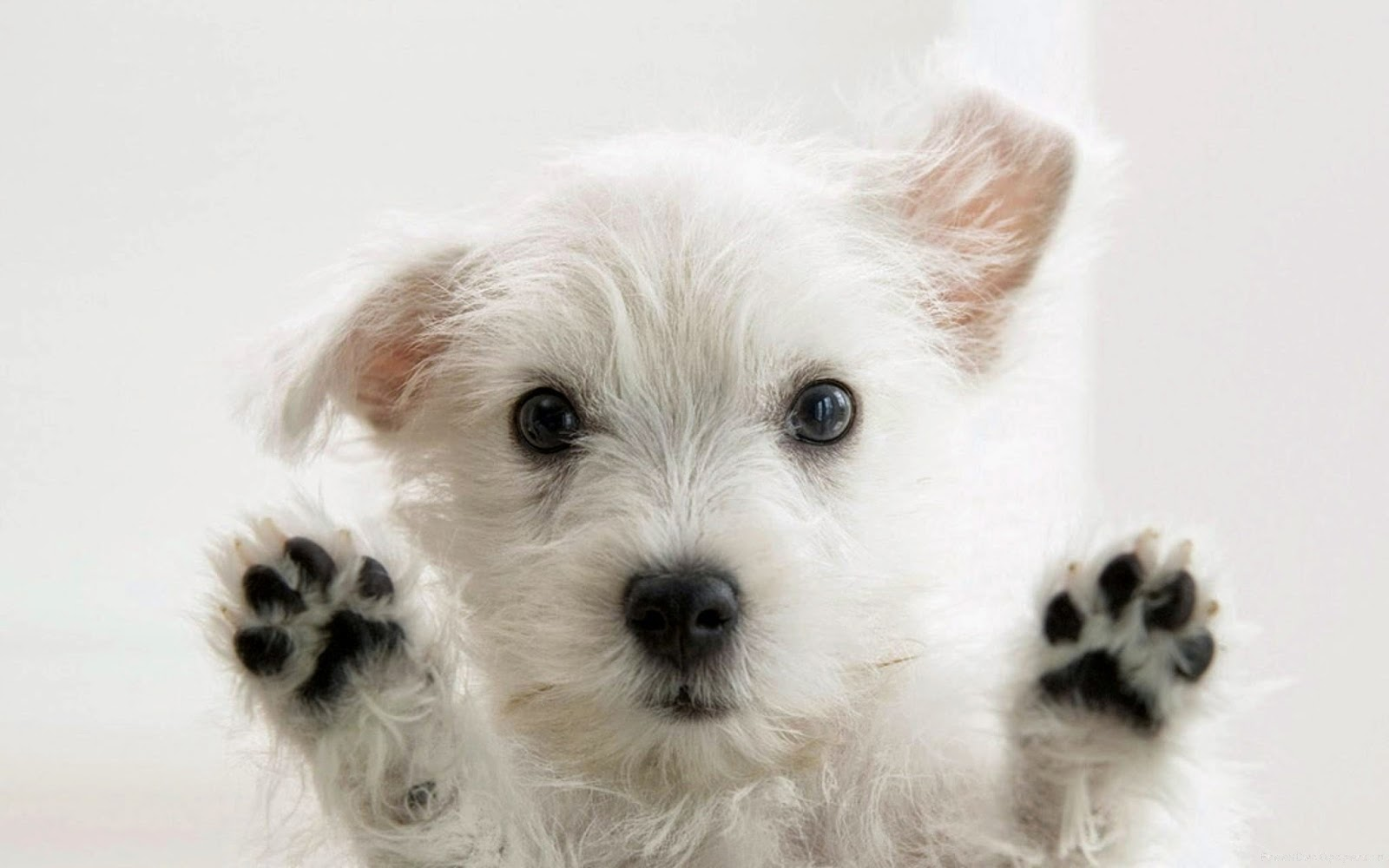 Cute white and black little dog