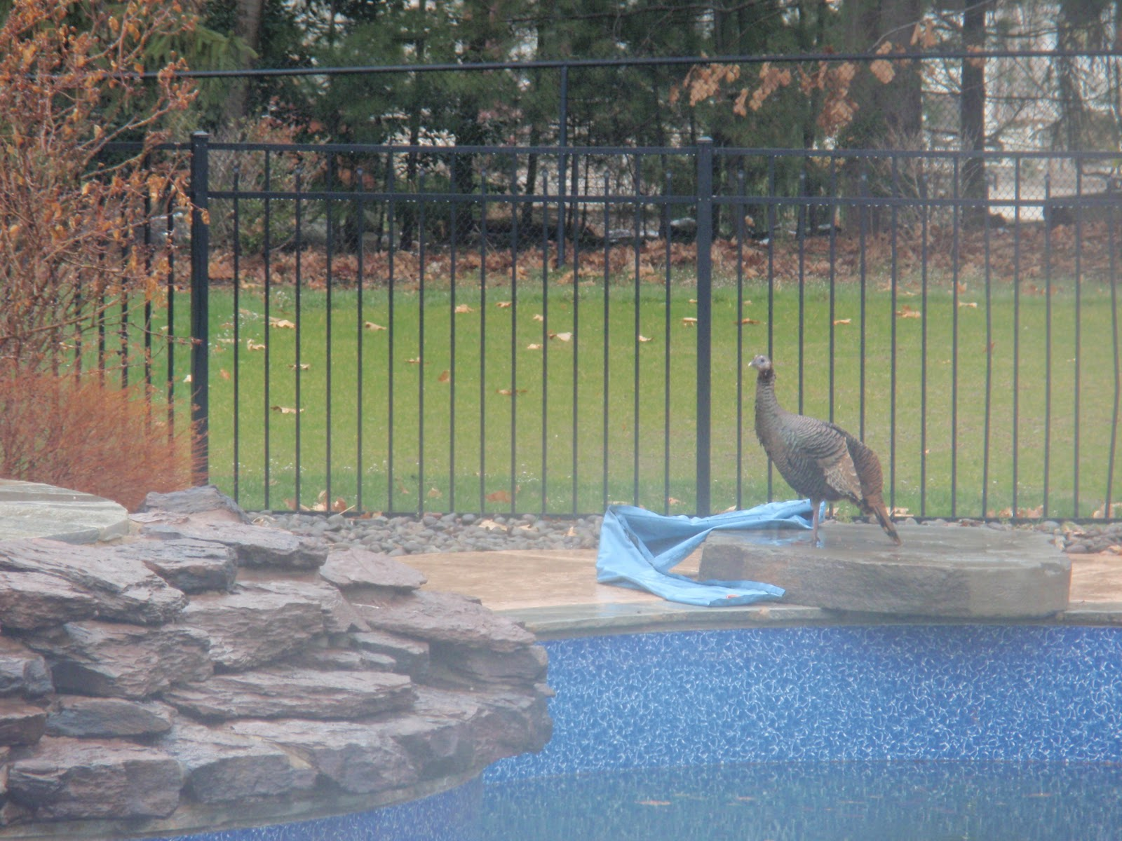Diy by design a wild turkey really outdoor decorating for Zfs pool design