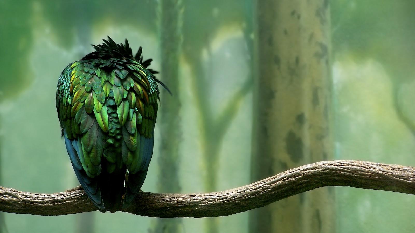Bird Wallpaper Sitting on a Tree Brand HD 1080p