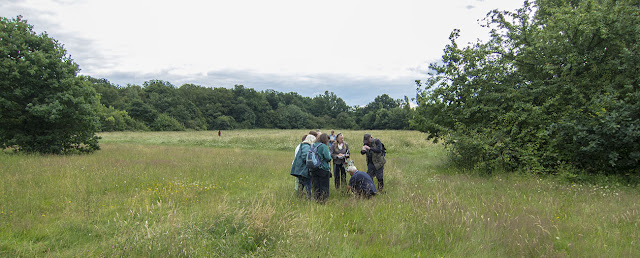 The group identifying a butterfly.  Jubilee Country Park butterfly walk, 15 July 2012.