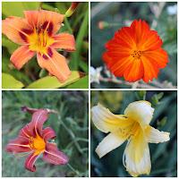 Mosaico de fotos - Quadro Flores do JotaV criado com Pixlr