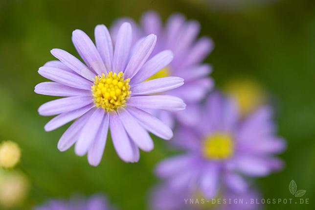 Ynas Design Blog, Gartenblumen