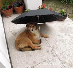 Jestem mała , ale cwana, żadnego deszczu się nie boję