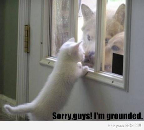 cat dog cao gato