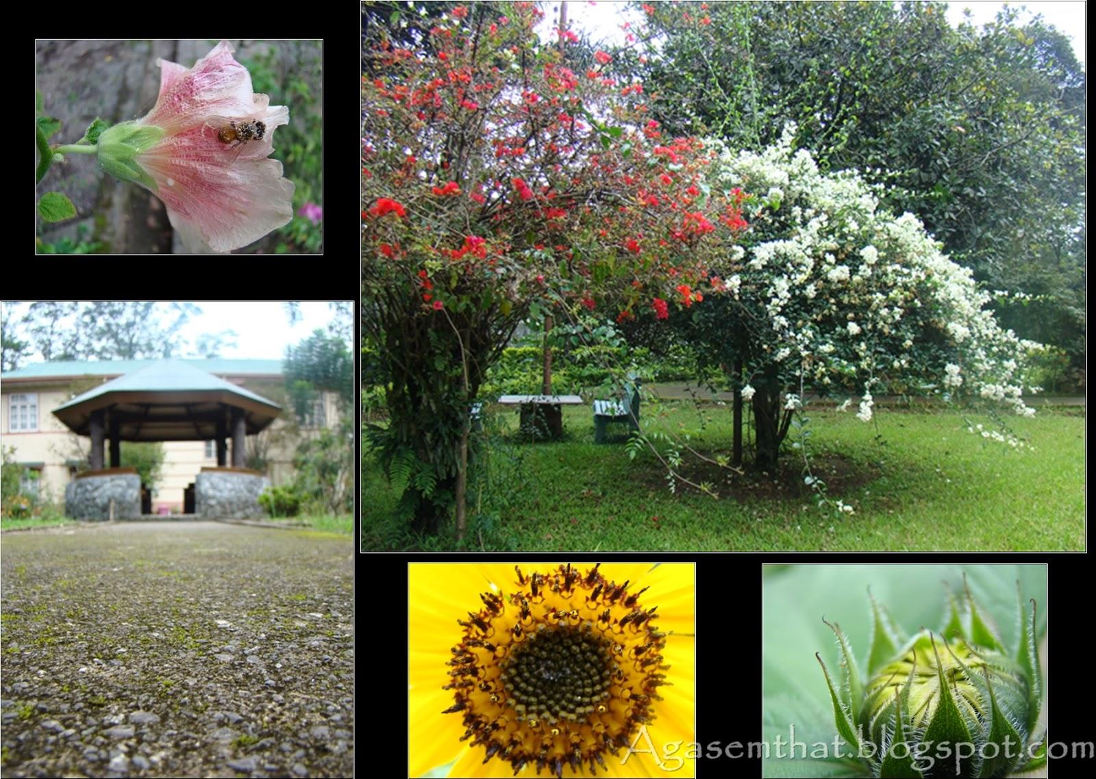 Litagua 13 Mt Peace Retreat House Baguio City