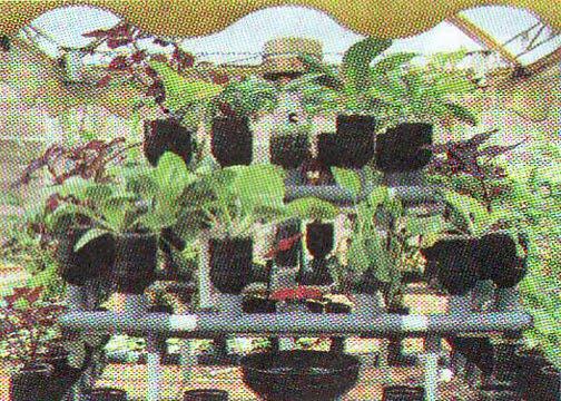 Pot sayuran