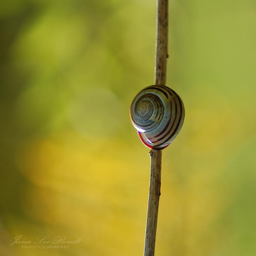 Fotografie Natur Schnecke
