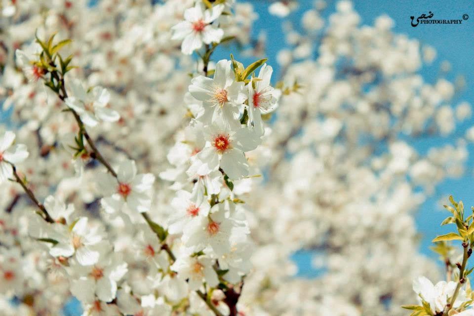 Baharda çiçek Açan Ağaçlar Cenneti Anlatan Renkler