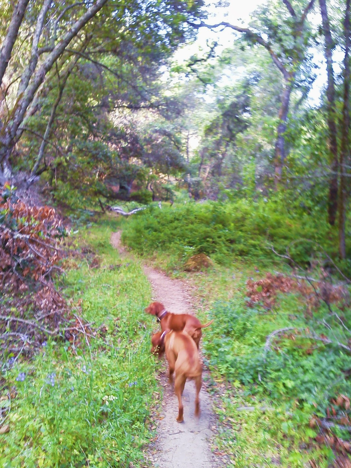 Redbirddog a hungarian pointer vizsla blog the road less traveled the urge is to take the most comfortable path the road with least resistance the shortest or most traveled route sciox Choice Image