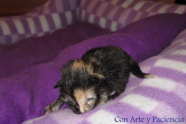 Gatitos, recién nacidos, consejos, mascotas, cuidados,