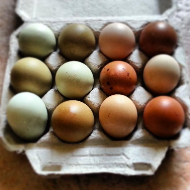 Marans Eggs