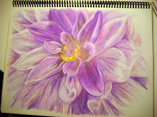 Work in Progress - 4th photo of a Color Pencil Drawing of a Dahlia Flower