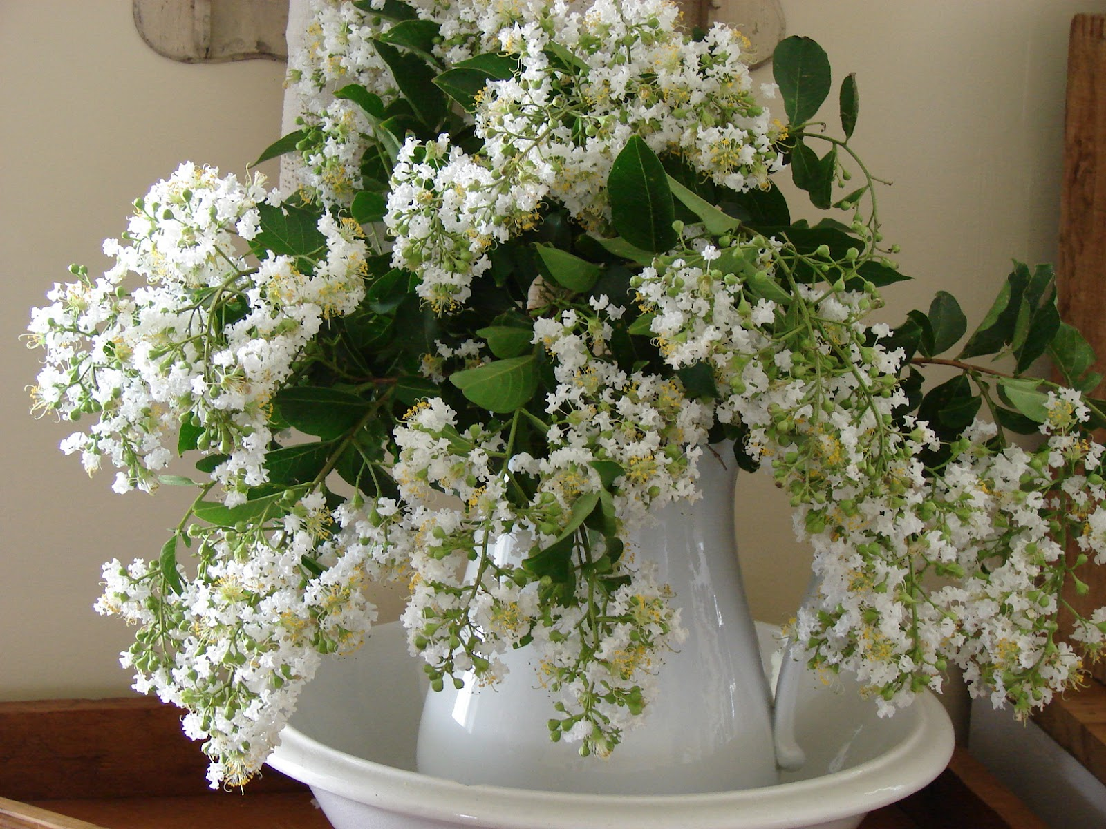 The Country Farm Home: The White Crepe Myrtle
