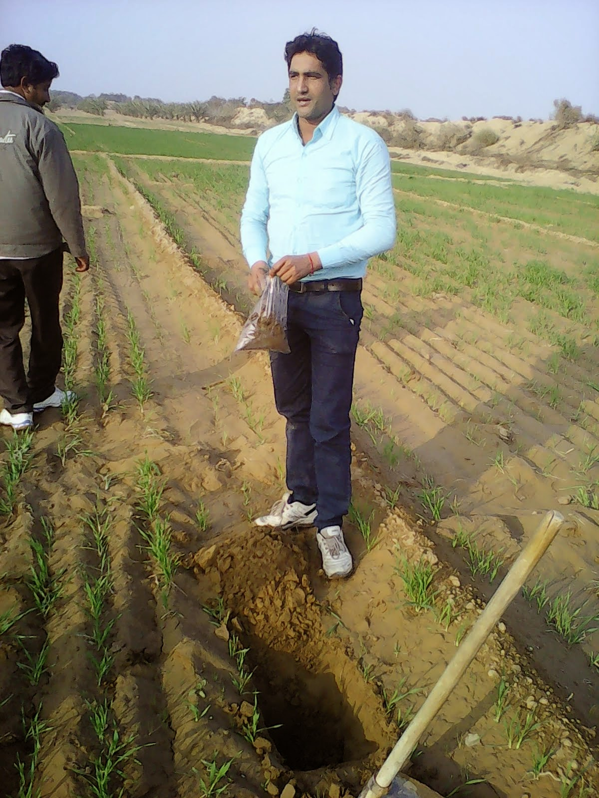 FILED STEVIA CULTIVATION
