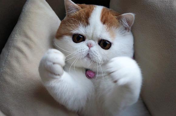 Foto Kucing Lucu Imut dan Menggemaskan 12
