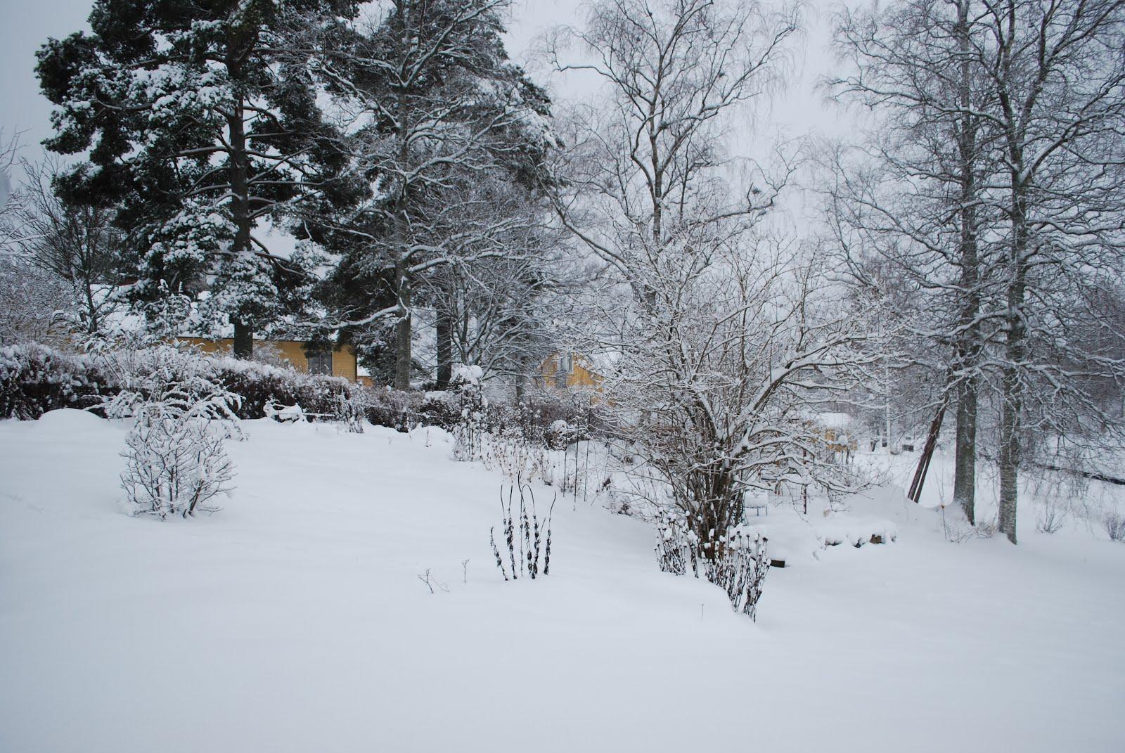Månadsbild Januari 2016