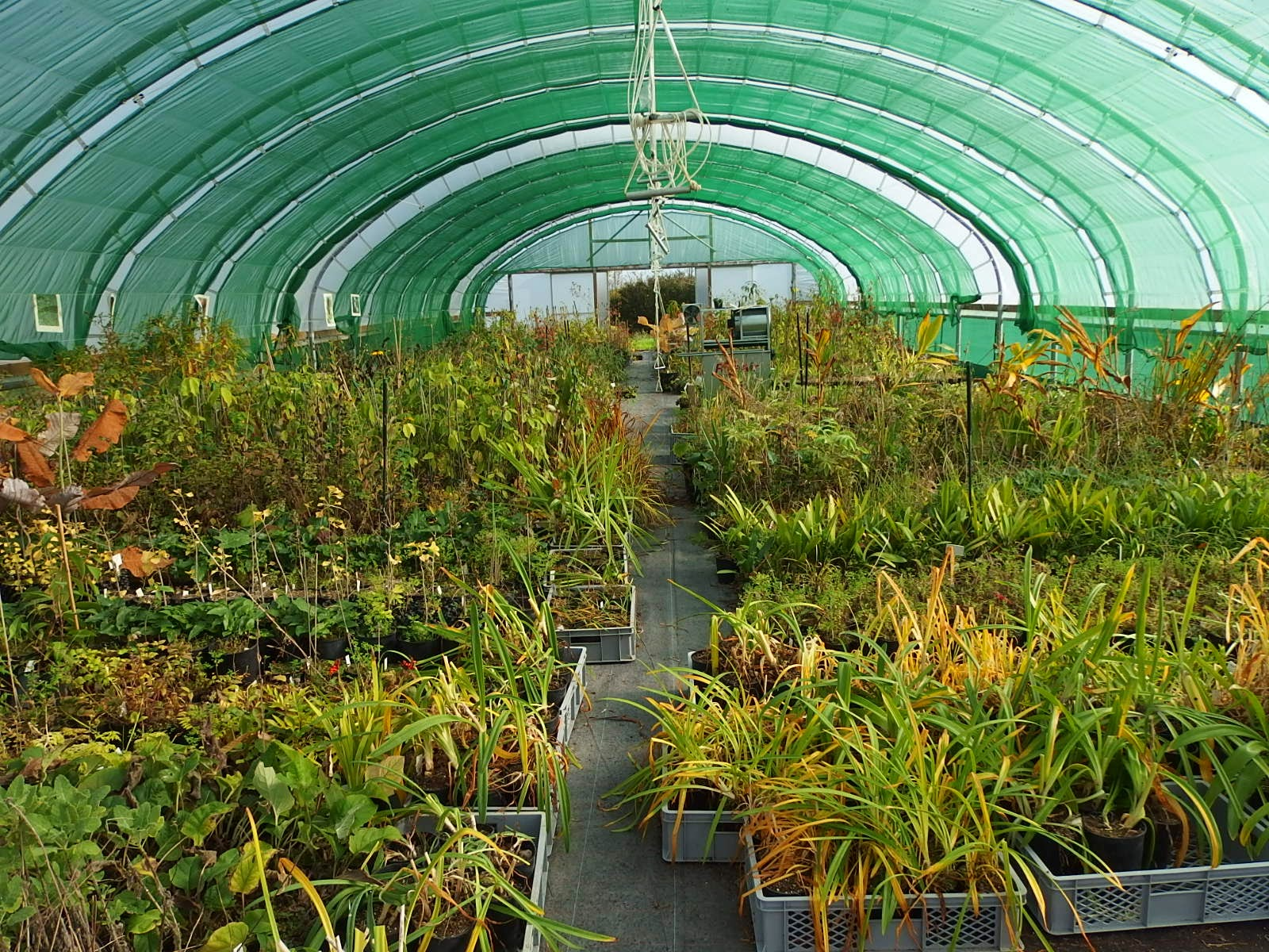 View of another polytunnel
