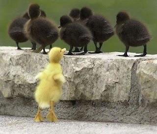 Хватит сравнивать с другими, будь собой!