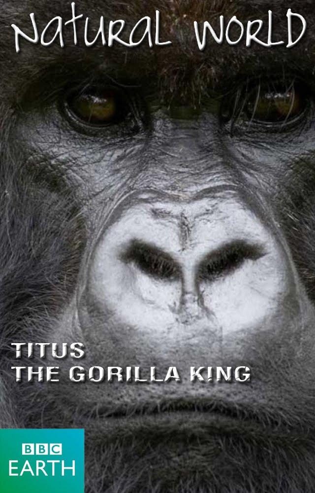 Titus: Goriller Kralı
